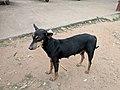 Kozhikode 26.jpg