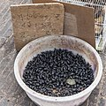 Kunming Yunnan China Pet-Market-02.jpg