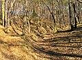 Kunraticky Forest West 1, Prague.jpg