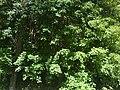Kupres-okolica01595.JPG