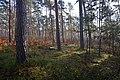 LSG Forst Rundshorn IMG 2307.jpg