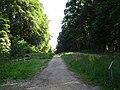 LSG Waldgebiet des Tiergartenwaldes PM-18-07.jpg