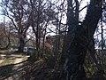 La Torrinaja seminascosta dalla vegetazione - panoramio.jpg