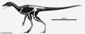 Lagerpeton skeleton.png