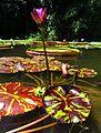 Laguna Venezuela, Jardín Botanico de la UCV Caracas, Venezuela.jpg