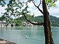 Lake Bled - panoramio (14).jpg