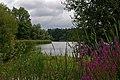Lake and Rosebay Willowherb - geograph.org.uk - 271631.jpg