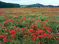 Landschaftsschutzgebiet Auenverbund Werra, WDPA ID 378407. Werraaue mit Blick auf Albungen und Burg Fürstenstein.jpg