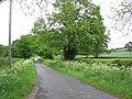 Lane towards Trelydan - geograph.org.uk - 1322760.jpg