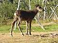 Lapland - Urho Kekkonen National Park - 20180728172801.jpg