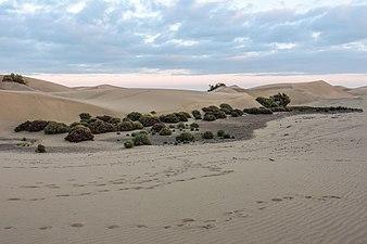 Las Dunas de Maspalomas con vegetación.jpg