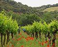 Le bonheur est dans le champ de vignes !.jpg