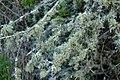 Lichen (8).jpg