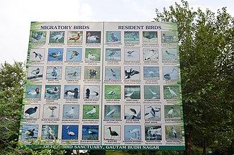 Okhla Sanctuary -  Birds found in Okhla bird sanctuary