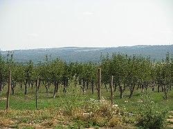 Livada de meri - sat Galmeia - panoramio.jpg