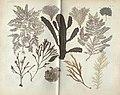 Locupletissimi rerum naturalium thesauri accurata descriptio, et iconibus artificiosissimis expressio, per universam physices historiam (TAB. CII) (8389319671).jpg
