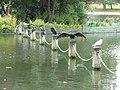 London , Westminster - Hyde Park, Birds in the Serpentine - geograph.org.uk - 2053714.jpg