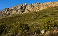 Looking up Table Mountain.jpg