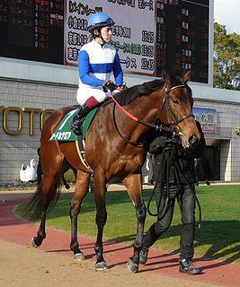 Lord Kanaloa Japanese-bred Thoroughbred racehorse