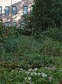 Louis I. Kahn Park (6327699279).jpg