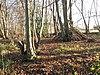 Bois inférieur, Ashwellthorpe
