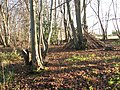 Lower Wood Nature Reserve - a shelter made of tree stems - geograph.org.uk - 1614932.jpg