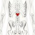 Lumbar vertebra 1 posterior2.png