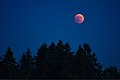 Lunar Eclipse 2018 SG 017 (42791001035).jpg