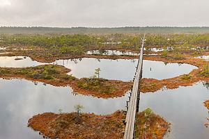 Wetland conservation - Image: Männikjärve raba tornist