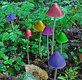 Magische Pilze W.jpg