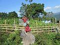 Maize field in Soibada.jpg