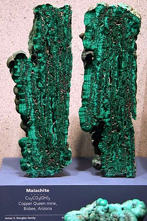 Mineral collecting - Malachite specimen from the Copper Queen Mine,  Bisbee, Arizona. Dr Douglas saved many of the best mineral specimens from the Copper Queen for his personal collection. His family later donated many of them to the Smithsonian.