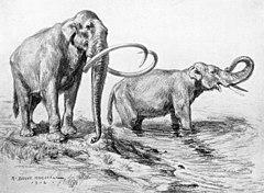 Mammuthus columbi.jpg