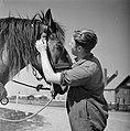 Man met een paard in het Joodse werkdorp in de Wieringermeer, Bestanddeelnr 254-4922.jpg
