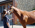 Manduro-Sister Act yearling filly (6113177015).jpg