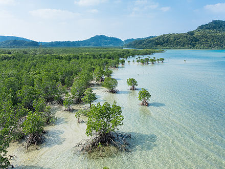 Mangrove swamp at Iriomote Island, Japan, providing beneficial services of sediment accumulation, coastal protection, nursery and fish-spawning grounds which may in turn support coastal fishing communities. At least 35% of the world's stock of mangrove swamps has been destroyed in just 20 years[1]