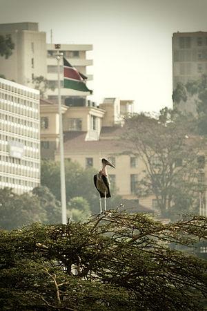 Timeline of Nairobi - Nairobi, 2011