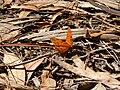 Mariposa en el bosque - panoramio.jpg