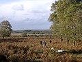 Matley Heath, west of Matley Wood, New Forest - geograph.org.uk - 24704.jpg