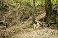 Mežs - panoramio (8).jpg