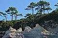 Meschers-sur-Gironde 17 Calcaire&pins maritimes 2013.jpg