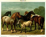 Zleva: těžký kůň, pony, lehký kůň. Na obrázku můžete také vidět několik koňských zbarvení.