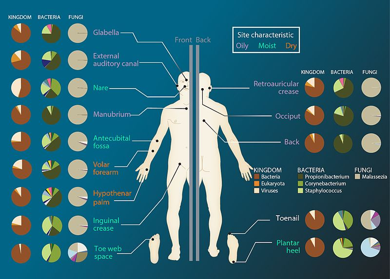 File:Microbiome Sites (27058471125).jpg