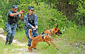 Military working dog training 120621-N-TC587-055.jpg