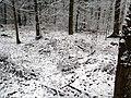 Mohyly - Zlukov u Veselí nad Lužnicí - západní část 2.JPG