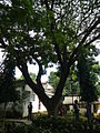 MoisesEscuetaParkTiaong,Quezonjf1427 18.JPG