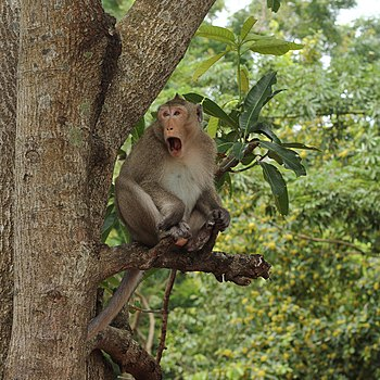 Monkey in the jungle.jpg