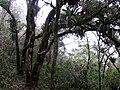 Monte verde - panoramio.jpg
