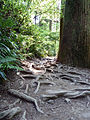 Mount Takao - Trail 6 (9407372597).jpg