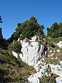Mountain pine near the Crêt de la Neige - panoramio.jpg